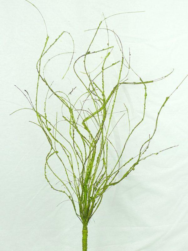 Green Twig Bush