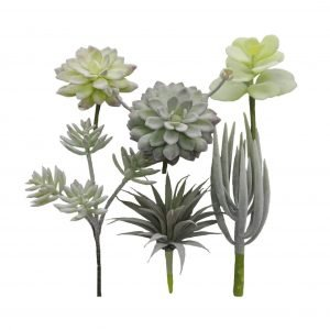 Succulent Assortment - Pack of 6