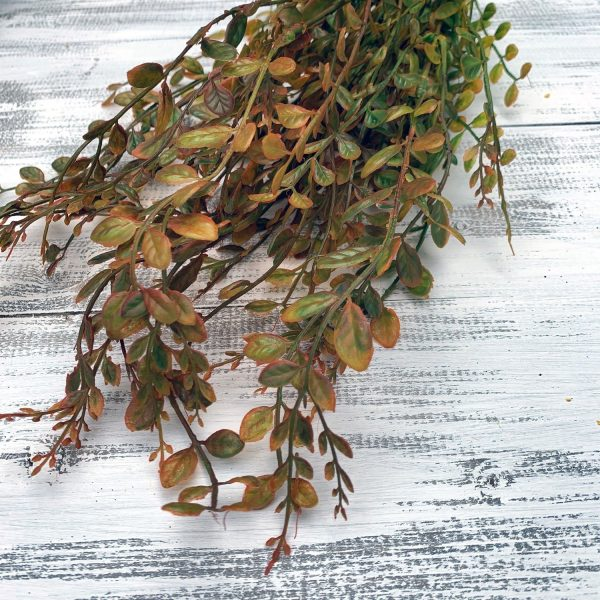 Fall Boxwood Bush X7 - 23""