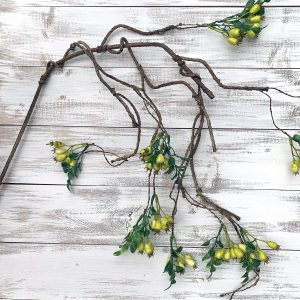 Twigs & Branches
