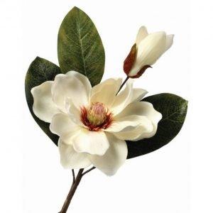 """Cream Magnolia Pick - 14"""""""