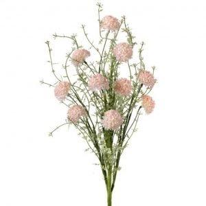 """Coral Wild Allium Bush - 24"""""""